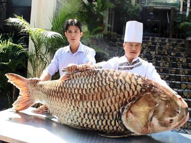 """Cá hô """"khủng"""" hơn 1 tạ từ Campuchia về Sài Gòn - 1"""