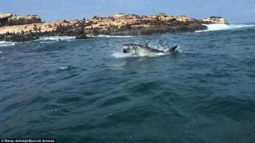 Cận cảnh cá mập khủng lao lên đớp mồi trên thành tàu - 7