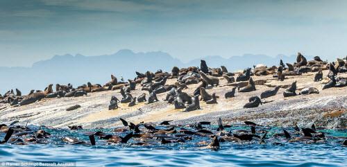 Cận cảnh cá mập khủng lao lên đớp mồi trên thành tàu - 8