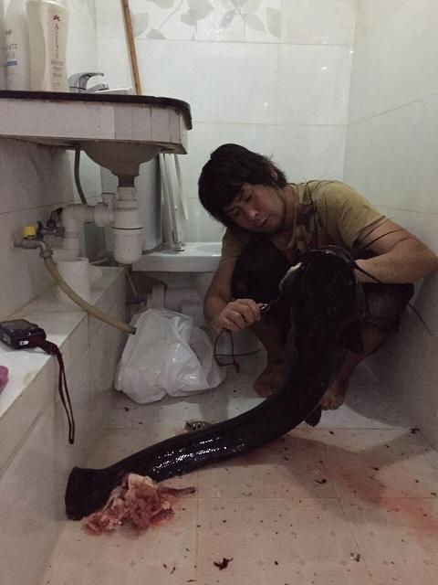 Hồng Kông: Bắt được cá trê khổng lồ trên sông đen ngòm - 5