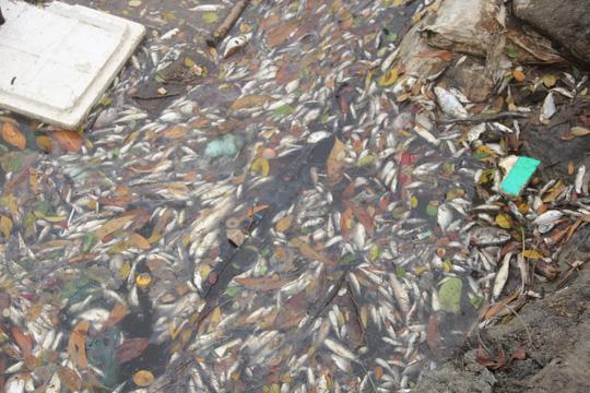 Phó Thủ tướng yêu cầu làm rõ nguyên nhân cá biển chết bất thường - 1