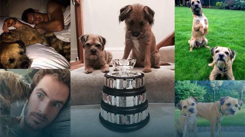 Thú cưng của Djokovic, Murray: Nói không với thú dữ - 2