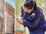 Tài chính - Bất động sản - HAGL tuyển dụng hàng ngàn lao động sang Lào, Campuchia