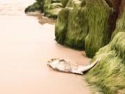 Tin tức trong ngày - Cá chết hàng loạt: Tắm biển có bị ảnh hưởng sức khỏe?