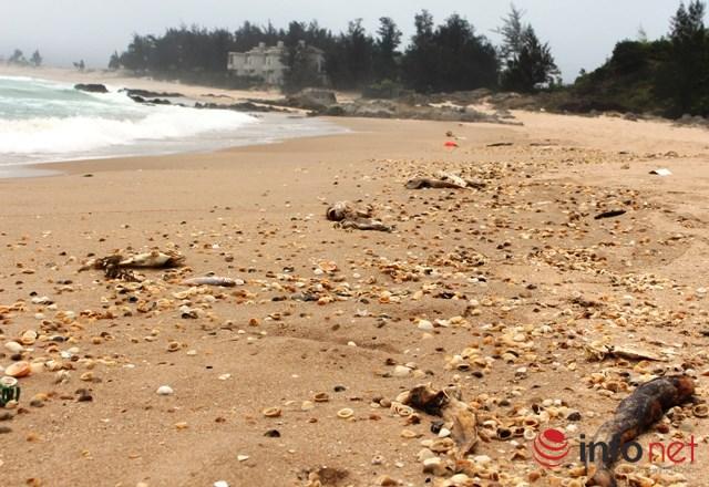 Đột nhập hệ thống xả thải từ Formosa ra biển Vũng Áng - 2