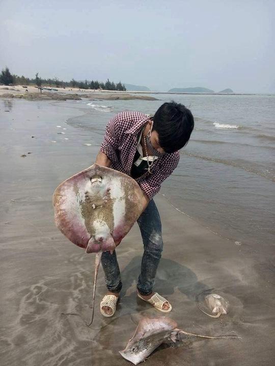 Truy tìm độc tố khiến 200 người ngộ độc sau ăn hải sản - 3