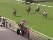 Thể thao - Bi kịch: Ngựa đua chết, 5 người bị thương
