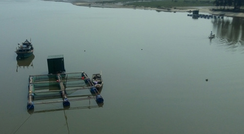 Cá biển chết hàng loạt trôi dạt vào bờ - 12