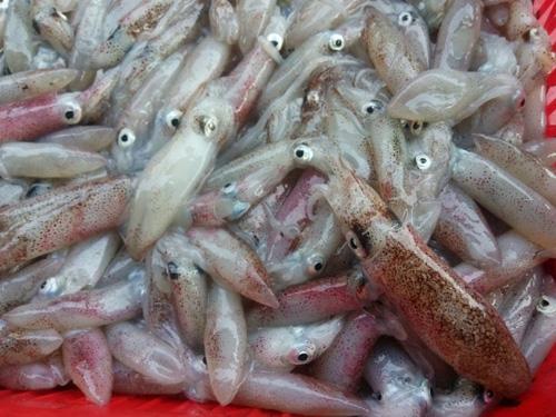 Cá chết hàng loạt ở Hà Tĩnh - 6