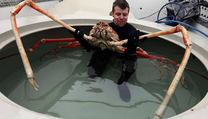 10 loài quái vật biển sâu kỳ dị nhất hành tinh - 1