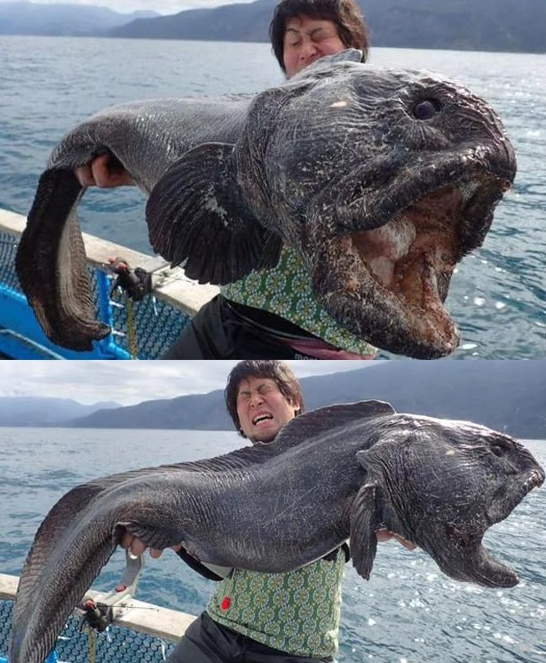 10 loài quái vật biển sâu kỳ dị nhất hành tinh - 2