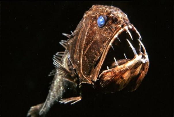10 loài quái vật biển sâu kỳ dị nhất hành tinh - 3