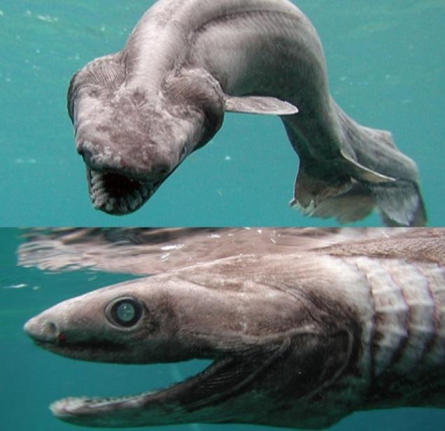10 loài quái vật biển sâu kỳ dị nhất hành tinh - 4