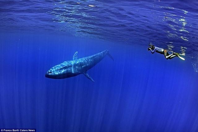 Choáng ngợp loài cá voi 170 tấn lớn nhất hành tinh - 1
