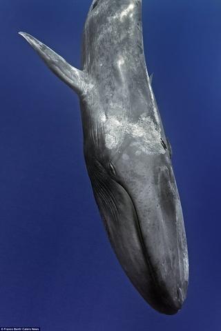 Choáng ngợp loài cá voi 170 tấn lớn nhất hành tinh - 3