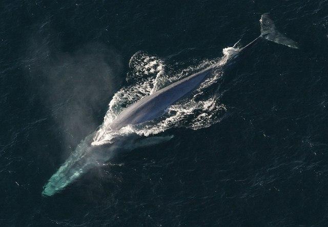 Choáng ngợp loài cá voi 170 tấn lớn nhất hành tinh - 6
