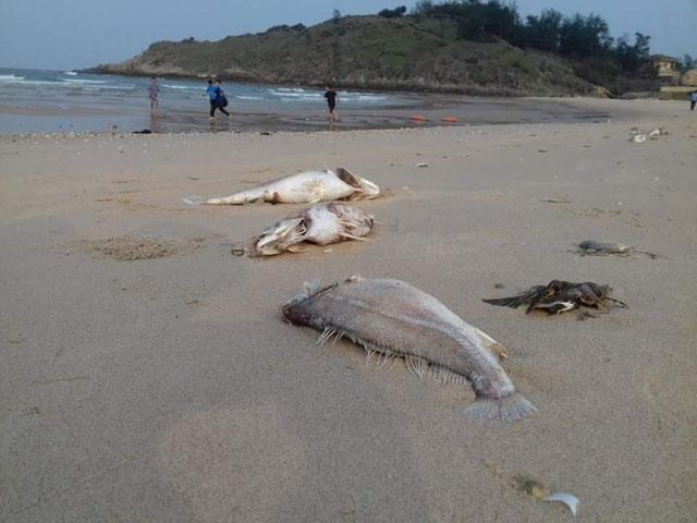Cá chết hàng loạt ở Miền Trung - Nguyên nhân do độc tố mạnh - 1