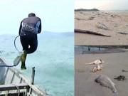 Tin tức trong ngày - Một thợ lặn ở Vũng Áng tử vong