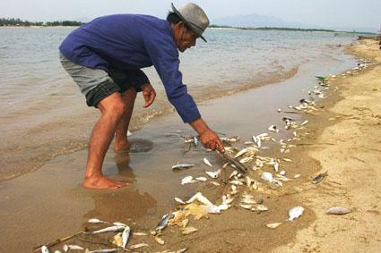 Vụ cá chết bất thường: Thủ tướng chỉ đạo hỗ trợ ngư dân - 1