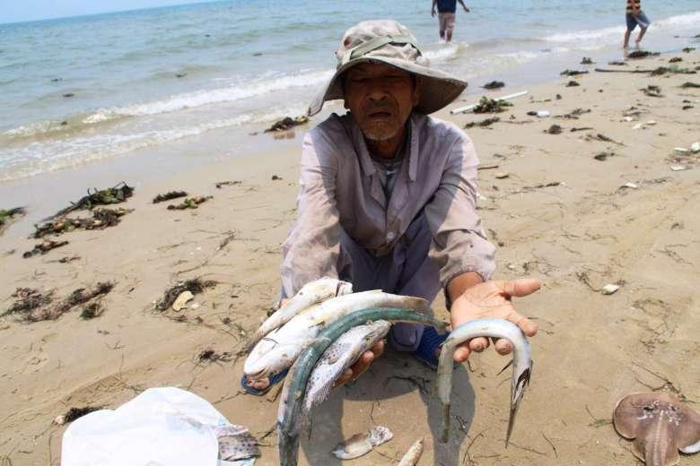 Cá chết ở ven biển Miền Trung lên báo nước ngoài - 1
