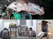 Tin tức trong ngày - Cá lại chết, thợ lặn tử vong, dân sợ