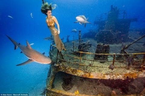 Cô gái táo bạo chụp ảnh làm bạn với cá mập - 1