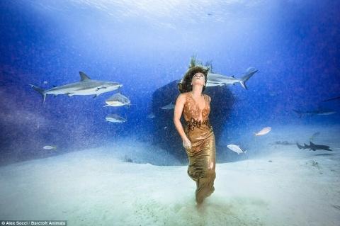 Cô gái táo bạo chụp ảnh làm bạn với cá mập - 2