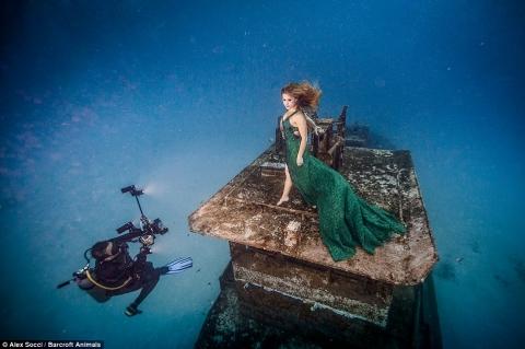 Cô gái táo bạo chụp ảnh làm bạn với cá mập - 3