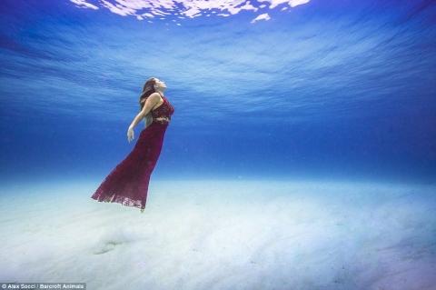 Cô gái táo bạo chụp ảnh làm bạn với cá mập - 5