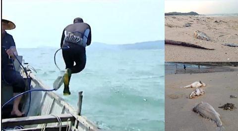 Các thợ lặn né kể về công việc ở cảng nước Sơn Dương - 1