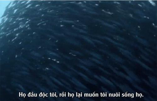 """Clip """"Đại dương cảnh báo con người"""" gây ám ảnh - 1"""
