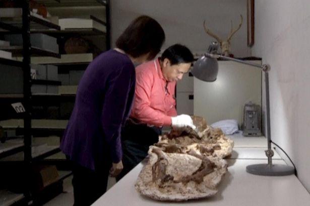Phát hiện hóa thạch mẹ ôm con 4.800 năm ở Đài Loan - 3