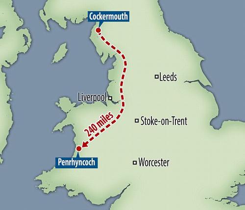 Chú chó vượt gần 400 cây số trong 12 ngày để tìm về với chủ cũ - 2