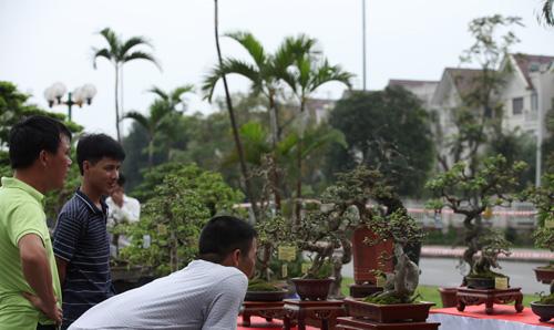Lễ hội sinh vật cảnh  lớn nhất Việt Nam tại Vinhomes Riverside - 4