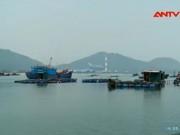 Video An ninh - Du lịch miền Trung điêu đứng vì cá chết hàng loạt