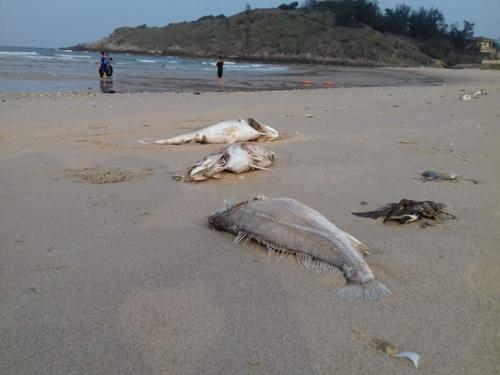 Cấm kinh doanh, tiêu thụ cá chết bất thường tại miền Trung - 1