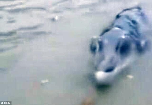"""TQ: Câu được cá sấu """"lai"""" cá heo, răng mọc cao quá đầu - 2"""