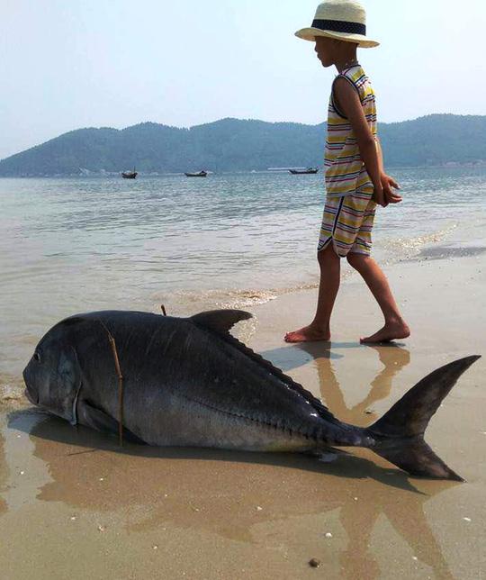 Cá chết trôi dạt vào bở biển Huế - Tin mới vụ cá chết 24H - 1