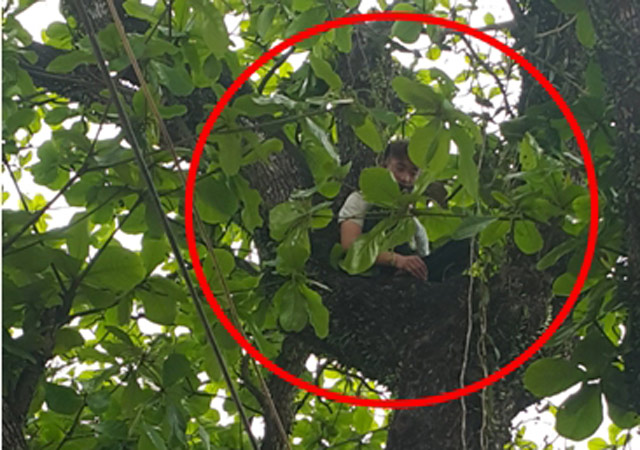 Nam thanh niên cố thủ trên cây 11 tiếng chưa chịu xuống - 1