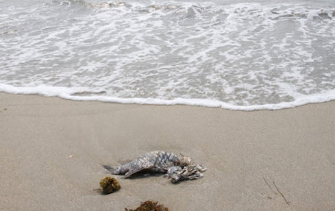 Đà Nẵng công bố kết quả kiểm nghiệm nước biển - 1