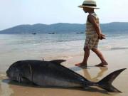 Tin tức trong ngày - Cá tầng đáy ào ạt dạt vào bờ biển Huế