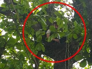 Nam thanh niên cố thủ trên cây 11 tiếng chưa chịu xuống