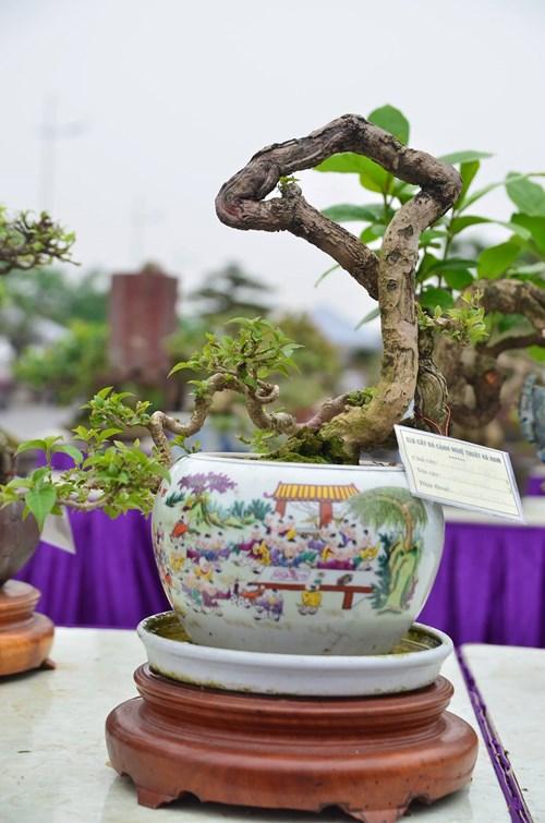 Những cây bonsai tí hon giá hàng trăm triệu - 10