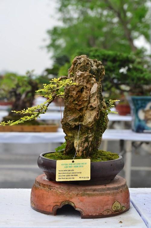 Những cây bonsai tí hon giá hàng trăm triệu - 7