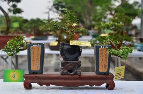 Những cây bonsai tí hon giá hàng trăm triệu - 9