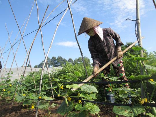 Cơ hội cho nông nghiệp hữu cơ - 1