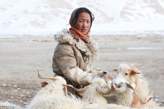 Sonam,12 tuổi, có nhiệm vụ đảm bảo đàn dê của gia đình có đủ thức ăn để cho sữa. Đây là điều khó khăn khi phần lớn đất đai nằm dưới lớp tuyết dày.