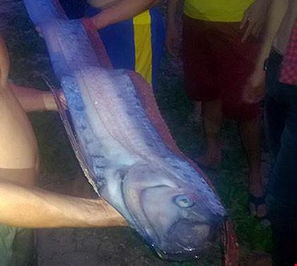 Cá hố khổng lồ dạt vào bờ biển Phan Thiết - 1
