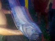Tin tức trong ngày - Cá hố khổng lồ dạt vào bờ biển Phan Thiết
