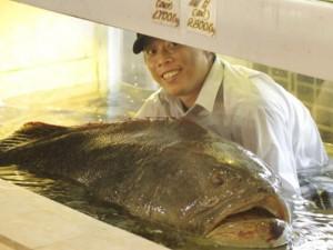 """Cá """"khủng"""" vào nhà hàng: Giá bạc triệu"""